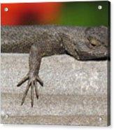 Lounge Lizard Acrylic Print