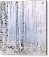 Love Amidst The Aspens Acrylic Print