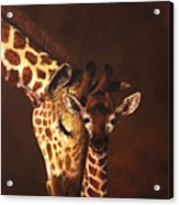 Love And Pride Giraffes Acrylic Print