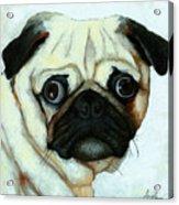Love At First Sight - Pug Acrylic Print