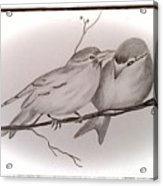 Love Birds Acrylic Print by Ginny Youngblood