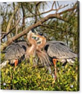 Love Birds - Great Blue Heron Acrylic Print