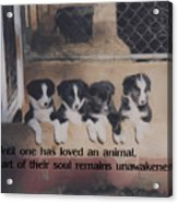 Love For Animals Acrylic Print by Smilin Eyes  Treasures