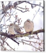 Love Is In The Air - Mourning Dove Couple Acrylic Print