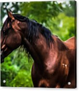 Love Of Horses Acrylic Print