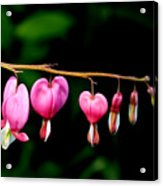 Love On The Line Acrylic Print