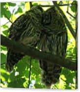 Love Owls Acrylic Print