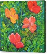 Love Those Poppies Acrylic Print