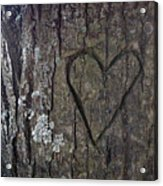 Love Tree Acrylic Print