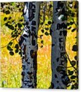 Love Trees Acrylic Print
