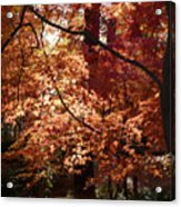 Lovely Autumn Tree Acrylic Print