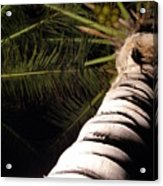 Lovely Bunch Of Coconuts Acrylic Print