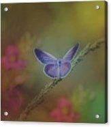 Lovely Color Acrylic Print