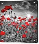 Lovely Field Of Poppies With Sun  Acrylic Print