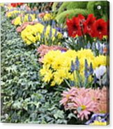 Lovely Flowers In Manito Park Conservatory Acrylic Print