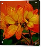 Lovely Flowers1 Acrylic Print