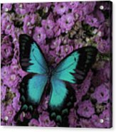 Lovely Green Winged Butterffly Acrylic Print