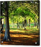Lovely Grouping Of Trees In Mississippi Acrylic Print