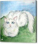 Lovely Kitty. White Cat Kusyaka Acrylic Print