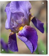 Lovely Leaning Iris Mother's Day Card Acrylic Print