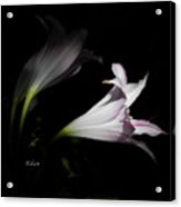 Lovely Lilies Dreams To Light Acrylic Print