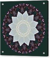 Lovely Lotus Acrylic Print