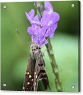 Lovely Moth On Dainty Flower Acrylic Print