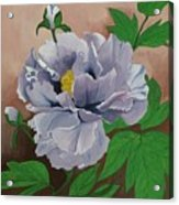 Lovely Peony Flower With Buds Acrylic Print