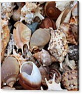 Lovely Seashells Acrylic Print