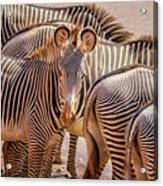 Lovely Stripes  7589 Acrylic Print