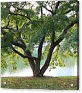 Lovely Tokyo Tree With Pond Acrylic Print