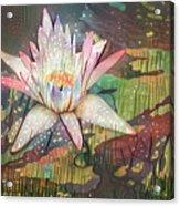 Lovely Waterlilies 2 Acrylic Print