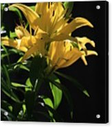 Lover's Lilly Acrylic Print