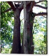 Lover's Tree Acrylic Print