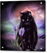 Loving My Kitty Acrylic Print