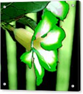 Loving The Color Green Acrylic Print