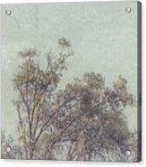 Loving The Trees Acrylic Print