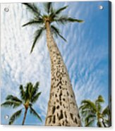 Low Angle View Of Palm Tree Acrylic Print