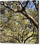 Low Angle View Of Trees In A Park Acrylic Print