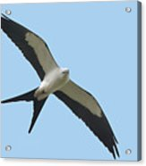 Low Flying Kite Acrylic Print