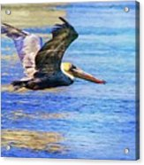 Low Flying Pelican Acrylic Print
