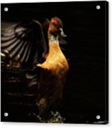 Low Key Duck Acrylic Print