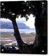 Low Tide And The Tree Acrylic Print