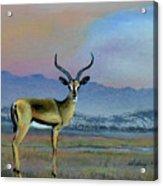 Lowell's Gazelle Acrylic Print