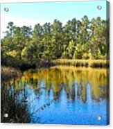 Lower Suwannee National Wildlife Refuge Ti Acrylic Print