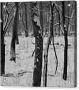Lowland Winter Acrylic Print
