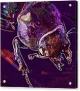 Lucane Kite Female Darling Beetle  Acrylic Print