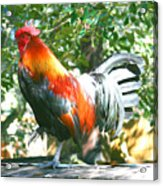 Luchenbach Rooster Acrylic Print
