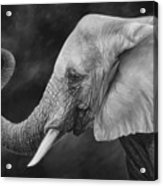 Lucky - Black and White Acrylic Print