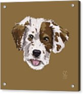 Lucky Brown Mixed Breed Acrylic Print